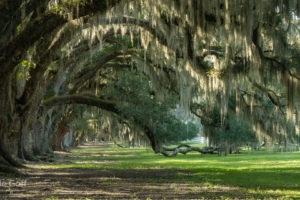 Lowcountry Photography and a little Civil War History