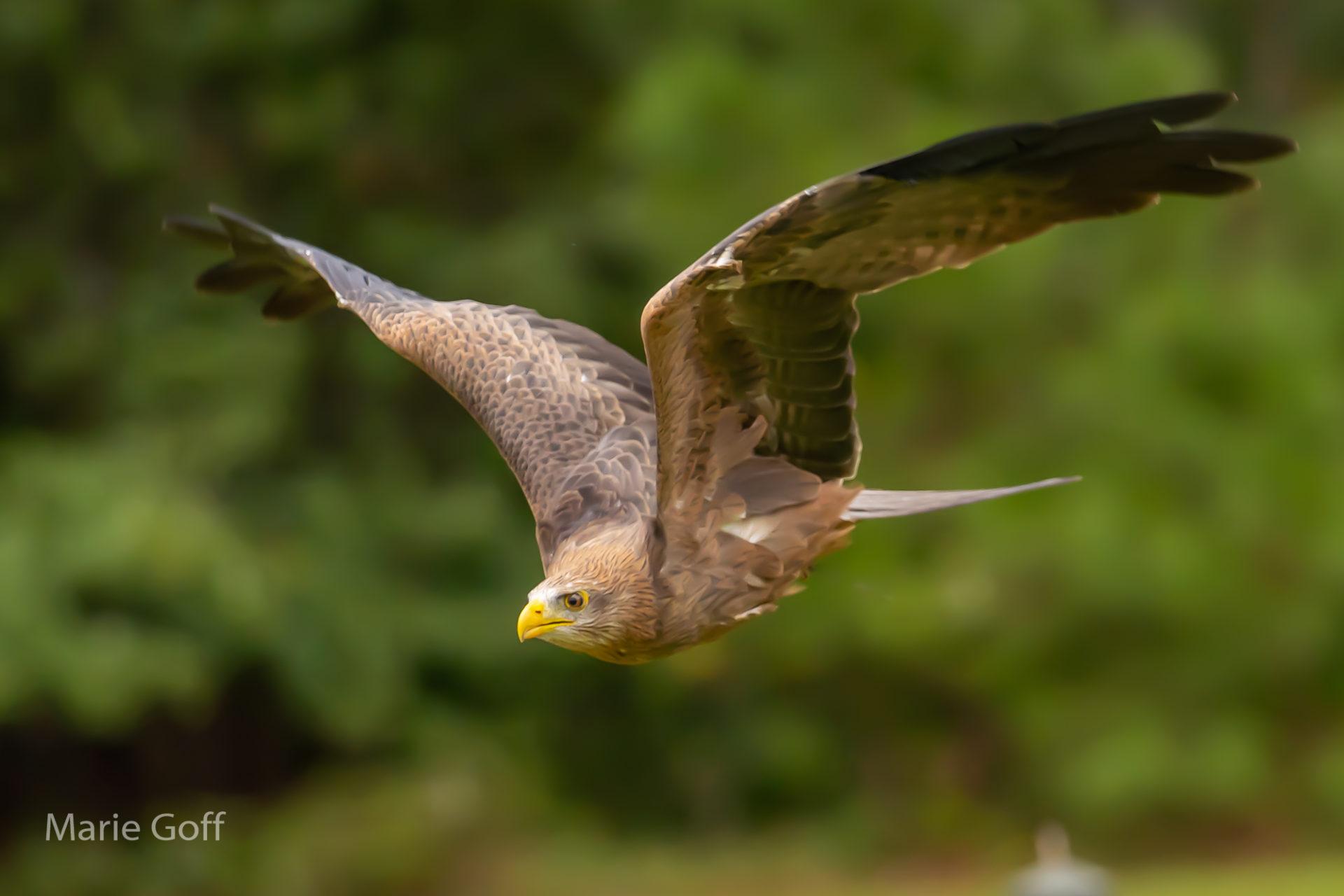 Tack sharp photos of birds-in-flight