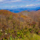 Why Purchase Knob Trail Offers the Best Day Hiking Adventure