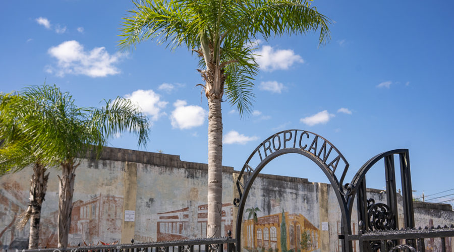 Five Simple Ways to Enjoy Tampa, Florida Like a Local