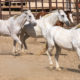 Five Reasons to Love Tanque Verde Ranch for Your Spring Getaway